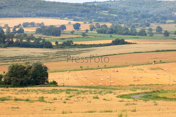 Поля пшеницы