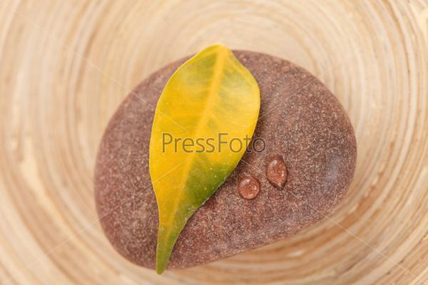 Фотография на тему Желтый лист на камне