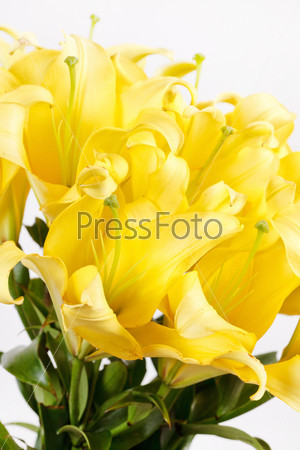 Фотография на тему Красивые лилии
