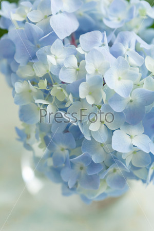 Фотография на тему Голубой цветок в вазе