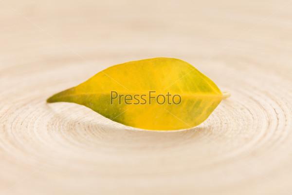 Желтый лист на древесине