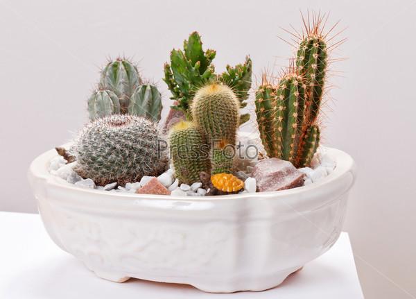 Фотография на тему Цветки кактуса