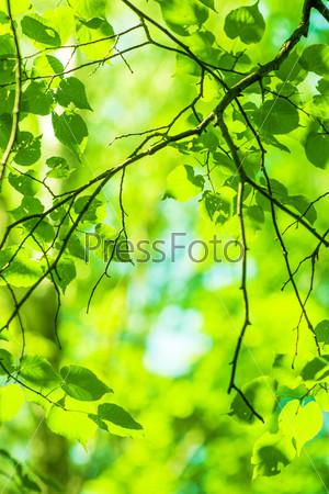 Зеленый расфокусированный летний фон