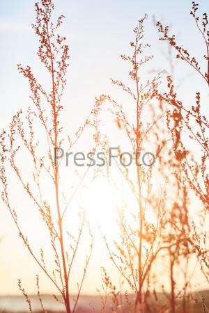 Летние растения в закатном свете