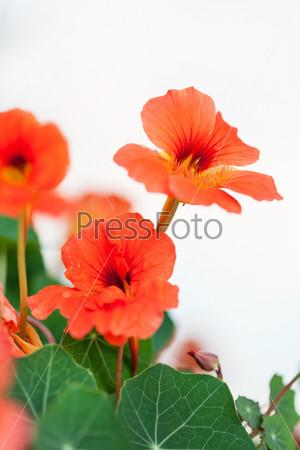 Фотография на тему Красивые цветы