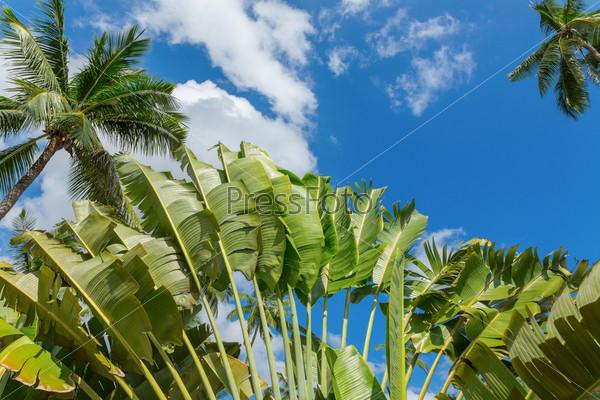 Пальмы на фоне голубого неба