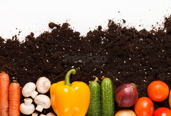 Фотография на тему Овощи на земле