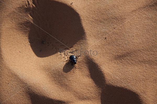 Скарабей на песке