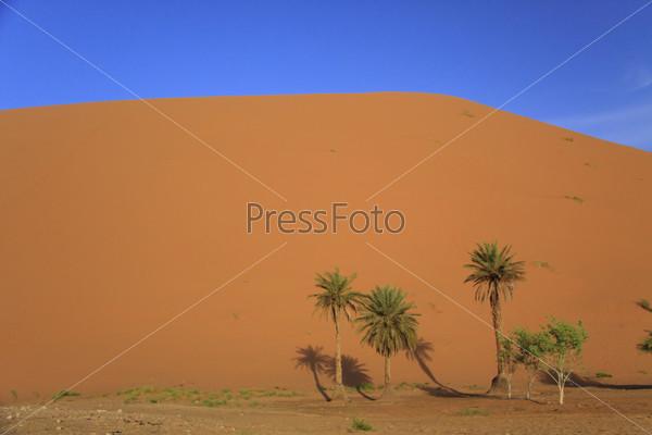 Дюны Сахары