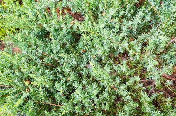 Фотография на тему Зеленый растительный фон