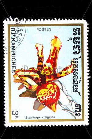 Почтовая марка Кампучии. Стангопея тигровая