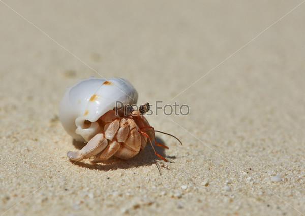 Отшельник на пляже