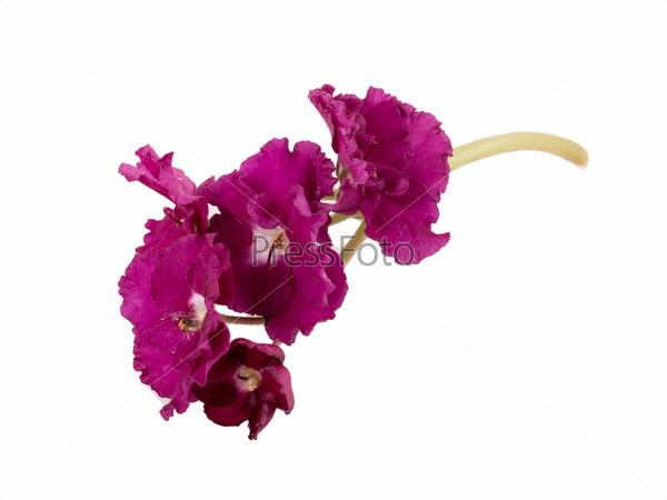 Фотография на тему Фиолетовый цветок