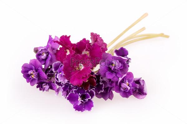 Фиолетовый цветок