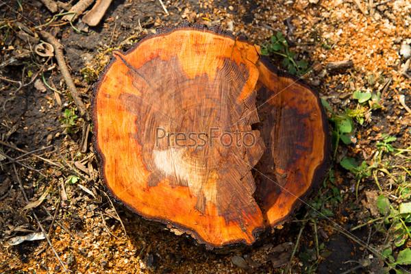 Фотография на тему Деревянный пень