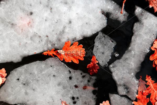 Растаявший лед с желтыми листьями