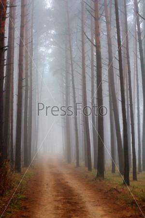Фотография на тему Деревья в тумане