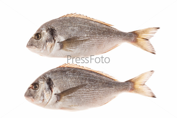 Фотография на тему Рыба дорадо, изолированная на белом фоне