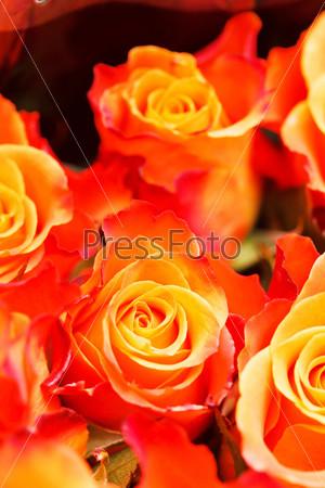 Фотография на тему Розы