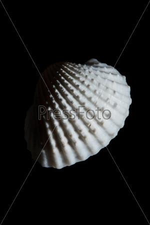 Морская раковина