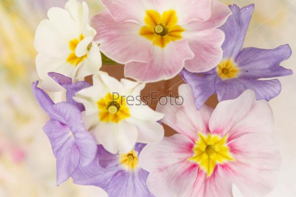 Фотография на тему Весенние цветы