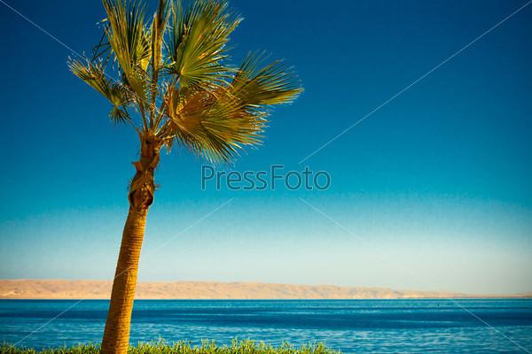 Фотография на тему Пальма и пляж