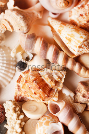 Морские раковины, фон