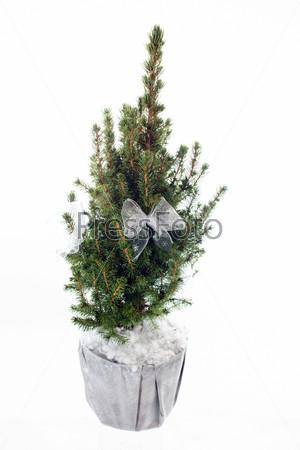 Фотография на тему Новогодняя елка