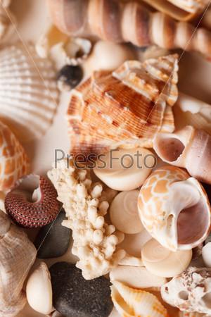 Фотография на тему Морские раковины