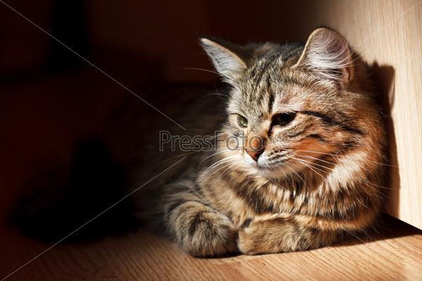 Фотография на тему Кот
