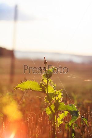 Летние растения на закате