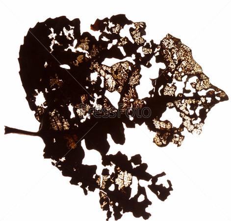 Фотография на тему Сухой лист