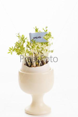 Фотография на тему Кресс-салат в яйце