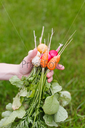 Фотография на тему Свежие овощи