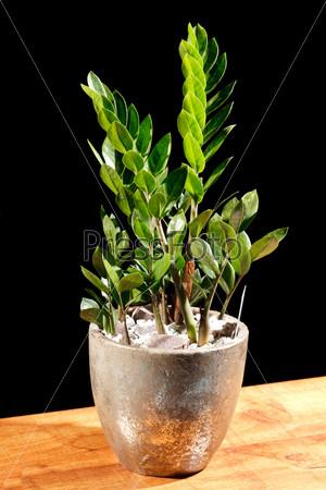 Фотография на тему Зеленое растение в горшке