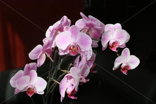 Фотография на тему Орхидея