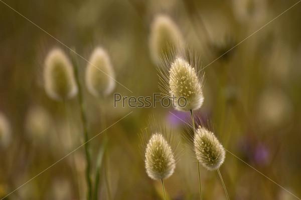 Колоски в поле