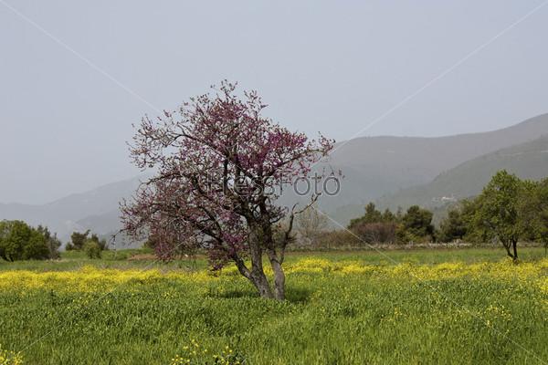 Фотография на тему Цветущее дерево на фоне гор