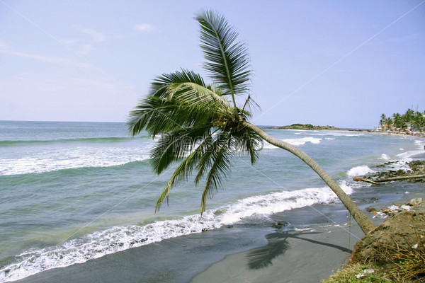 Изолированная пальма на берегу, Керала, Индия