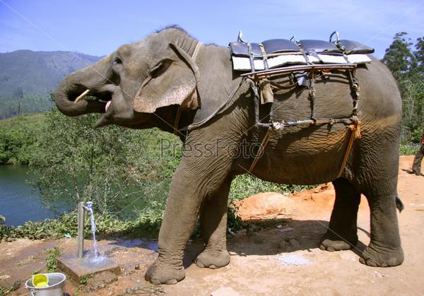 Фотография на тему Слон пьет воду у колодца