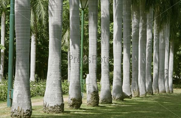 Фотография на тему Пальмовые деревья, сад Лоди, Дели, Индия
