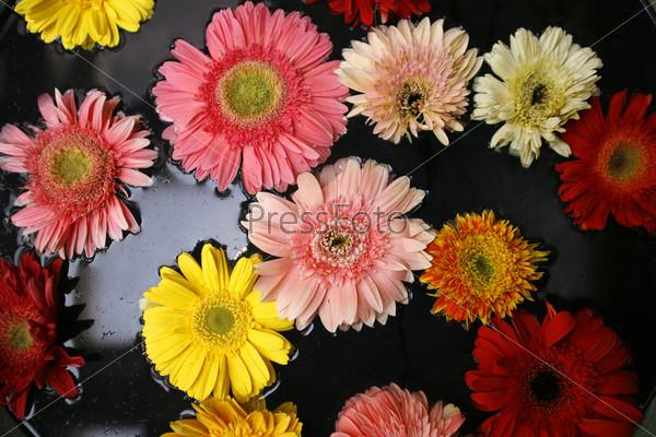 Яркие цветы, плавающие в воде
