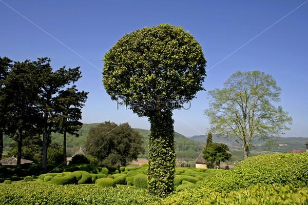 Круглое дерев в ландшафтных садах, Маркиссак,