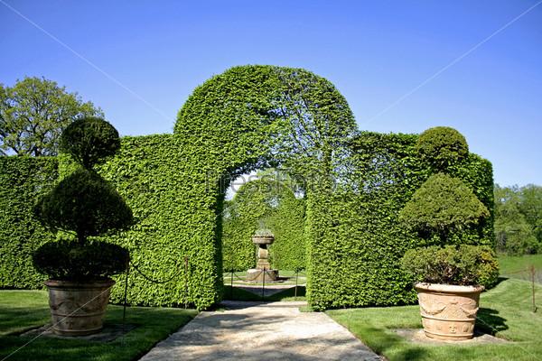 Арка из кустарника в садах Эриньяк, Франция