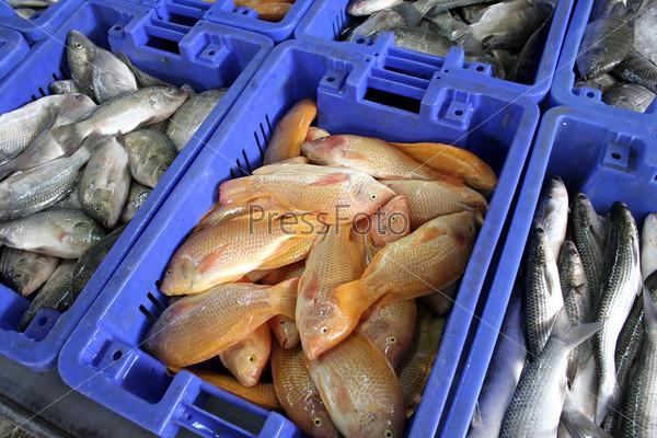 Ящики с различными видами рыбы