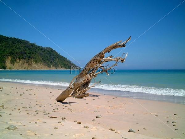 Фотография на тему Сухой ствол дерева на пустынном пляже, Монтесума, Коста-Рика