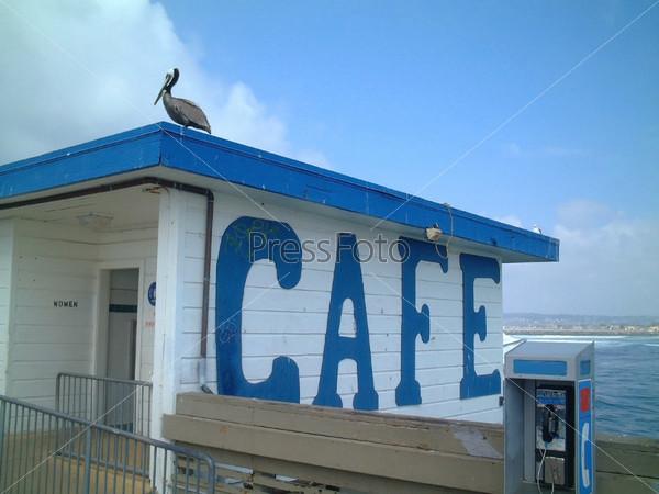 Пеликан, сидящий на крыше кафе, Сан-Диего, Соединенные Штаты Америки