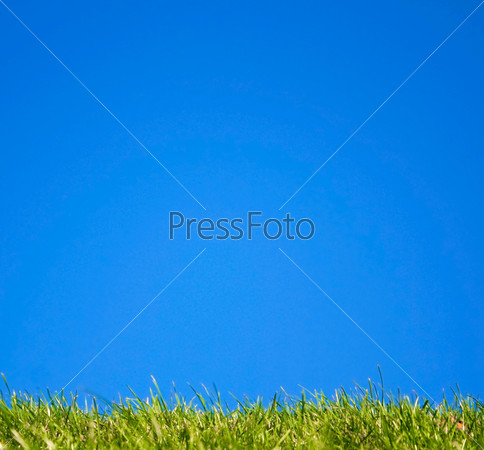 Фотография на тему Трава