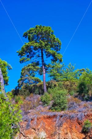 Фотография на тему Деревья и горы
