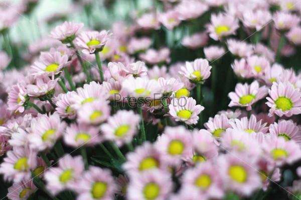 Букет из мелких цветов